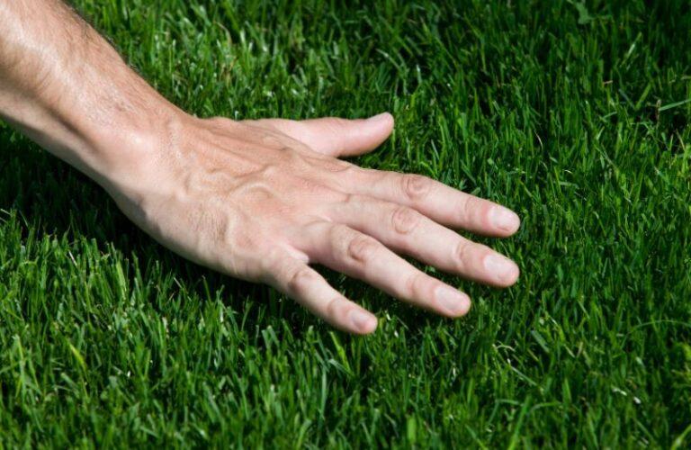 Top 10 Arizona Landscaping Tips in 2021